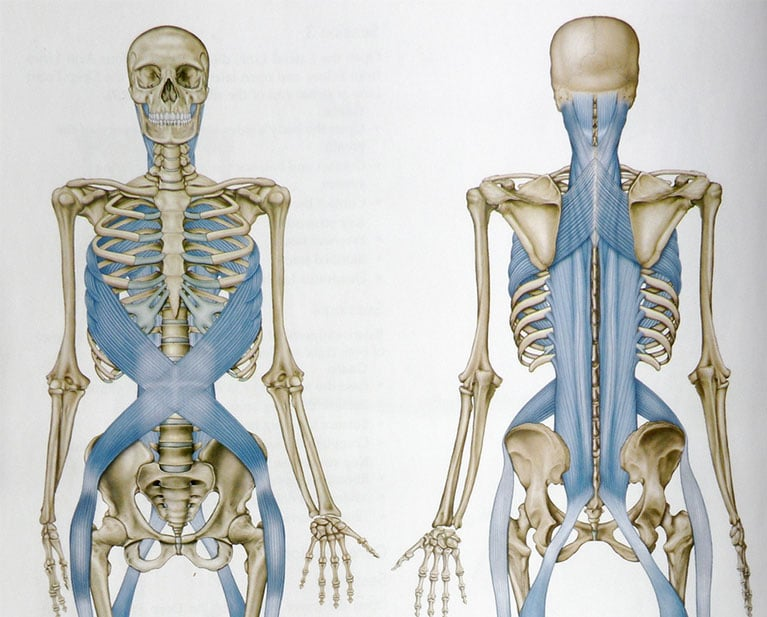 What is Fascia and Myofascial Release | Set Physical Therapy
