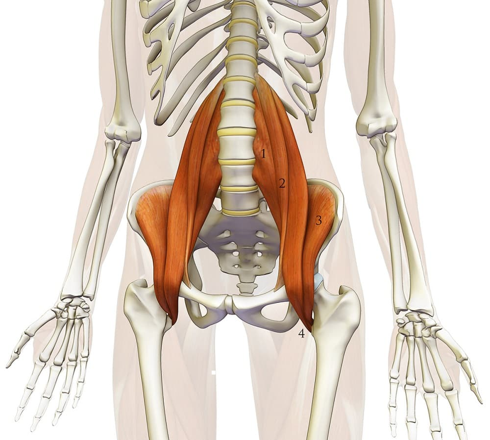 the psoas muscle what and where is that set physical therapy